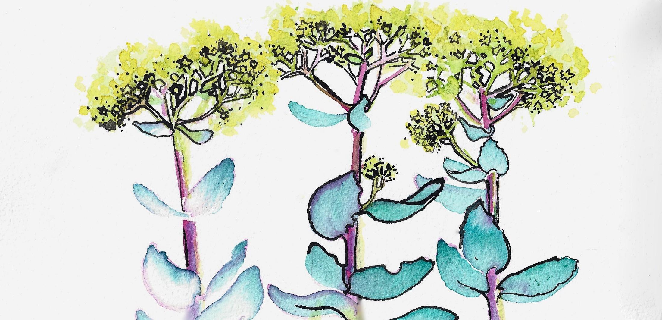 Illustration Anna Gran.