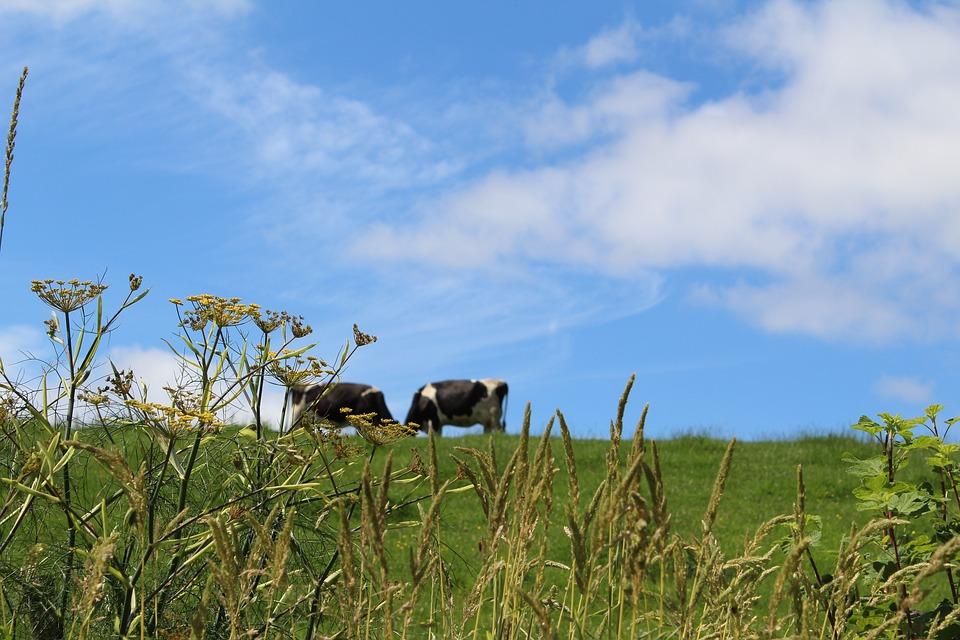meadow-2503453_960_720