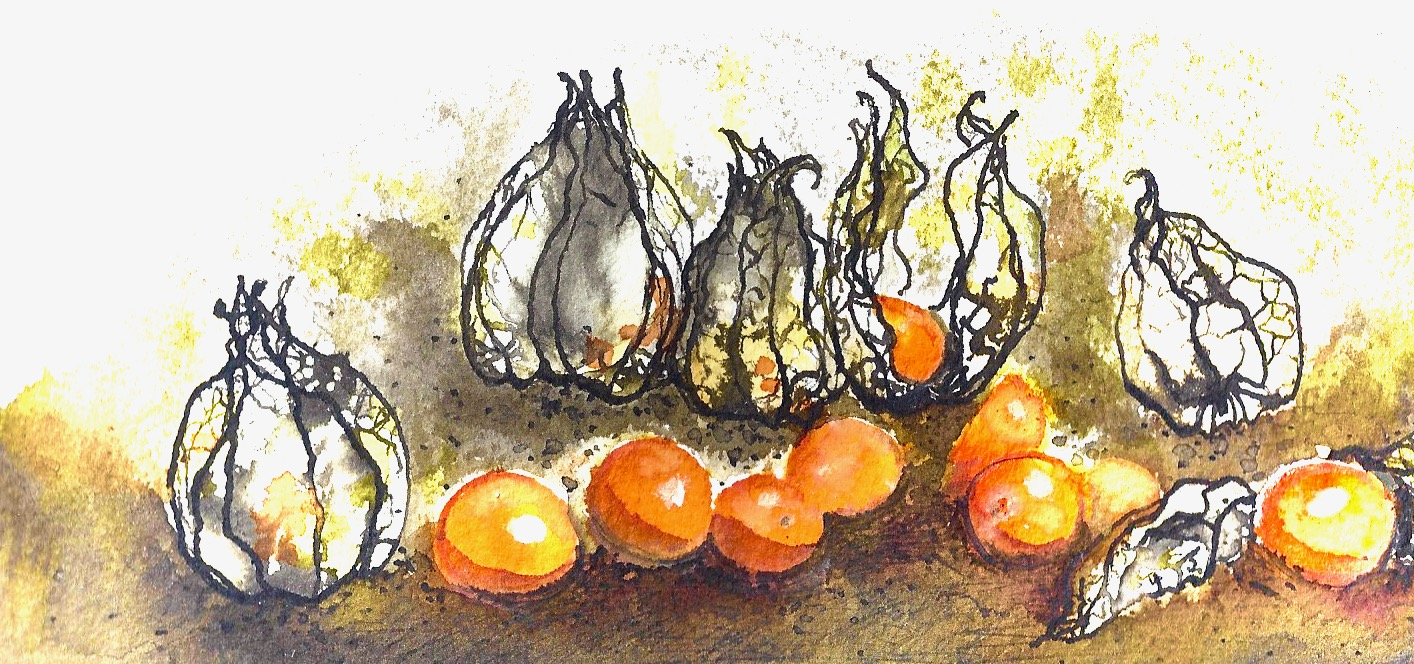 Physalis Peruviana Illustration Anna Gran