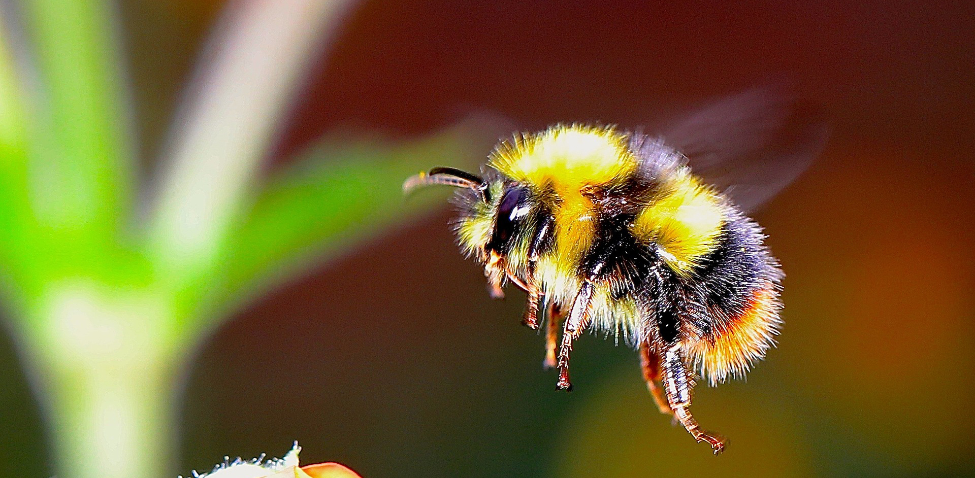 YFbumble-bee-2361336_1920